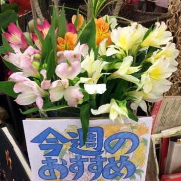 大田区 大森 花屋 アルストロメリア
