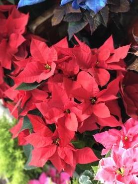 11/22は「いい…|「大花園」 (東京都大田区の花屋)のブログ